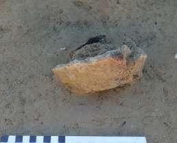 Fig. 4 - Fondo di ciotola decorata con fila continua di bugne coniche, in corso di scavo.